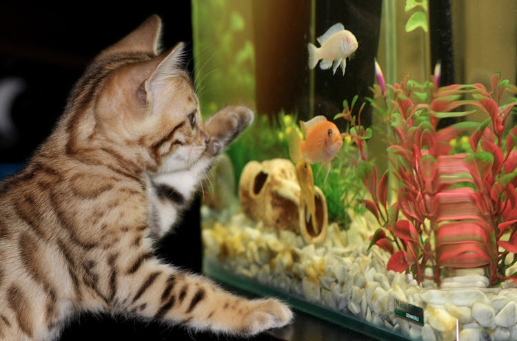 The BEST Freshwater Aquarium Fish for Your Fish Tank