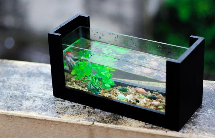 keeping fresh water fish