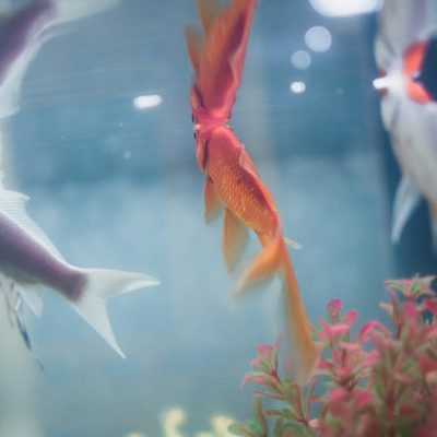 Best 5 Gallon Fish Tank